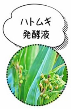 ハトムギ発酵液