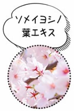 ソメイヨシノ葉エキス